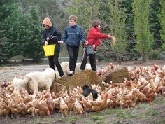 Join Jill and Nick as they take you behind the scenes to see where your food actually comes from!: October 2010