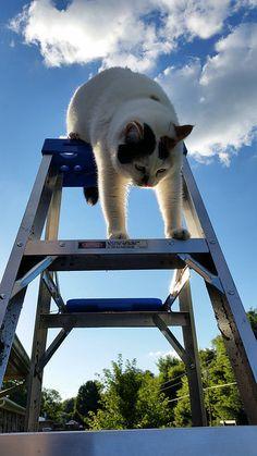 【困ったw】脚立から降りられなくなったネコの画像が話題 - ライブドアニュース