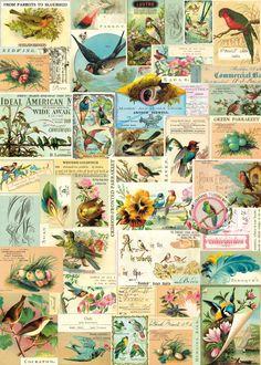 Bird ephemera wrap by Cavallini - sold in Pomponette