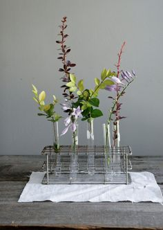 Vintage science lab test tubes and flowers