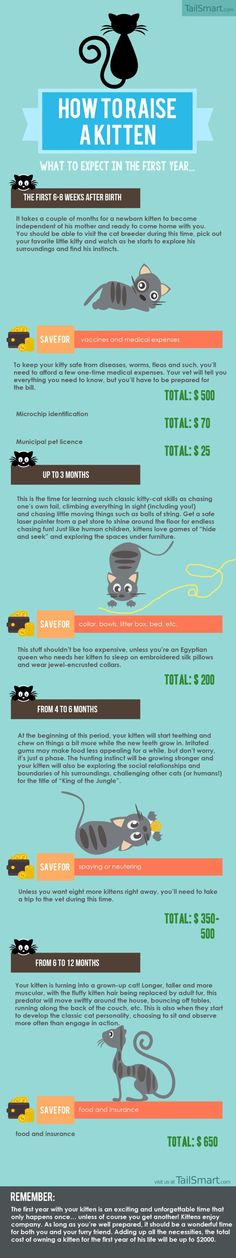 Raising A kitten What to expect The First Year Infographic