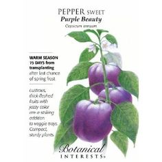 Purple bell peppers!