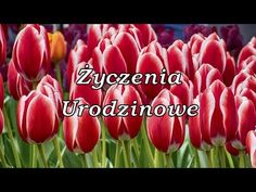 Życzenia Urodzinowe - na wesoło - YouTube Flower Power, Youtube, Vegetables, Flowers, Plants, Vegetable Recipes, Flora, Plant, Royal Icing Flowers