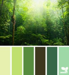 Forest Greens : greenery 2017 Pantone colour of the year