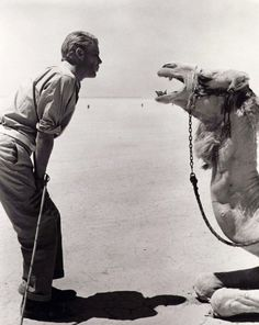 Peter O'Toole communes with his co-star on the set of Lawrence of Arabia (1962, dir. David Lean)