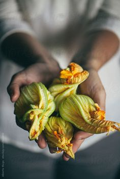 Woman holding fresh courgette flower by Alberto Bogo - Stocksy United Amazing Food Photography, Dark Food Photography, Raw Food Recipes, Italian Recipes, Zucchini Flowers, Edible Flowers, Summer Recipes, Food Styling, Food Inspiration