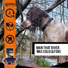DOG StreamZ® unique dog collars introduce a new magnetic technology for dogs - ideal for all dogs of any age. Non invasive process creating no heat. Suitable for use. Endorsed by champions. Cat Care Tips, Dog Care, Dog Kennel Designs, Unique Dog Collars, Dog Playground, Pumpkin Dog Treats, Dog Agility, Homemade Dog Food, Healthy Dog Treats