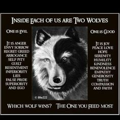 Two Wolves Quote Gallery inside each of us are two wolves wolf quotes two wolves Two Wolves Quote. Here is Two Wolves Quote Gallery for you. Two Wolves Quote tale of two wolves wolf quotes inspirational quotes quotes. Two Wolves Qu. Wisdom Quotes, Me Quotes, Quotes Women, Evil Quotes, The One You Feed, Native American Wisdom, Native American Wolf, Self Pity, Wolf Spirit