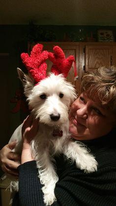 West Highland Terrier Christmas 2014