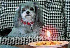 Happy 9th birthday, Belle ... JhC #Dog #Pet