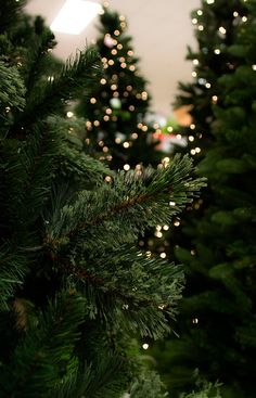 Inspiring Image on We Heart It – Christmas wallpaper Christmas Lights Wallpaper, Xmas Wallpaper, Christmas Phone Wallpaper, Christmas Aesthetic Wallpaper, Wallpaper Backgrounds, Winter Iphone Wallpaper, Wallpaper Ideas, Walpapers Cute, Wallpapers Wallpapers
