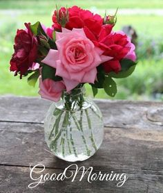 Beautiful Flowers Images, Flower Images, Beautiful Roses, Pretty Flowers, My Flower, Flower Art, Dark Wallpaper, Flowers Nature, Pink Roses