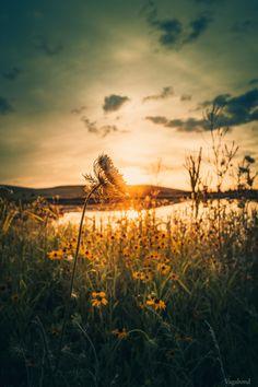 Sunrise Grass Field