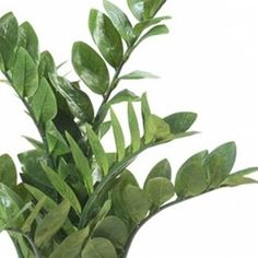 Easyplants Kunstplant Zamioculcas In Pot Emerald, Plant Leaves, Plants, Products, Flora, Plant, Beauty Products, Planting