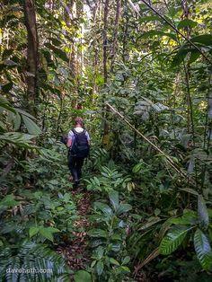 Steve johnson descending from the cloud forest