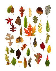 El arte de la naturaleza. Las hojas de otoño.