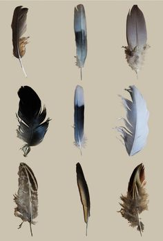 I'll go squirre, glis-glis and rabbit hunting in a minute:Feather Typology by Hannah Curson Feather Photography, Watercolor Feather, Colorful Feathers, Feather Tattoos, Pet Birds, Artsy, Photos, Graphic Design, Drawings