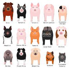 Illustration about Various pig breeds illustration set, domestic pigs set with breeds name. Illustration of animals, bacon, husbandry - 146686545 Pet Pigs, Baby Pigs, Farm Animals, Animals And Pets, Cute Animals, Poodles, Pig Showing, Pig Breeds, Pot Belly Pigs