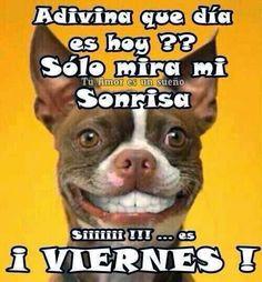 BuscoLaRisa: mi sonrisa de viernes