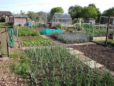 Allotment Garden, help and advice on finding and growing on an allotment, vegetable and herb gardening, general gardening The advice centre for home growers