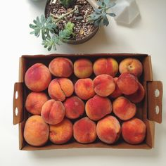 peaches are summer