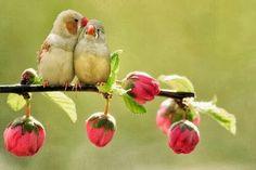 L'amour arrive Printemps.....!!!