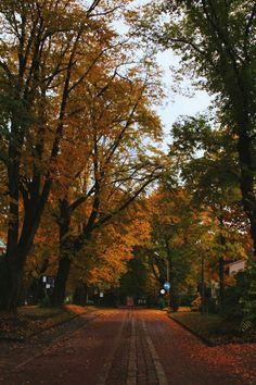 autumn, fall, and leaves image Autumn Illustration, Autumn Cozy, Autumn Feeling, Autumn Fall, Autumn Scenery, Autumn Aesthetic, All Nature, Hello Autumn, Winter Photography