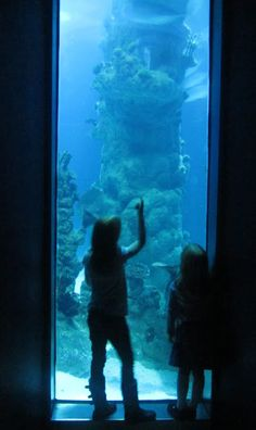 The Deep, Hull. One of our favourite attractions.