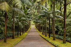 Furnas_Terra_Nostra_Gardens