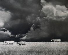 2000 Drei Schafe