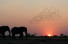 Botswana : Okavango