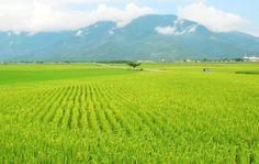Chihshang Township, Taitung County , Taiwan