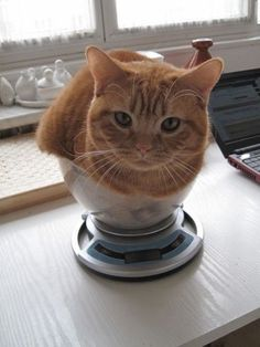 If it fits, i sits ? Click the Photo For More Adorable and Cute Cat Videos an… If it fits, i sits ? Click the Photo For More Adorable and Cute Cat Videos and Photos Baby Kittens, Cute Cats And Kittens, Cool Cats, Kittens Cutest, Ragdoll Kittens, Bengal Cats, Kittens Playing, Sphynx Cat, Siamese Cats
