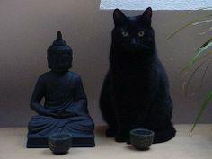 cat pose with Budda