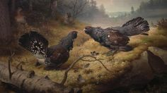 """The Fighting Capercaillies"" / ""Taistelevat metsot"", 1886 -oil on canvas- Ferdinand von Wright - Ateneum Finland Forest Scenery, Google Art Project, Ferdinand, Bird Art, Art Google, Finland, Art Museum, Art History, Fine Art America"
