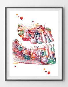 Children Teeth Art Print Deciduous Teeth Watercolor Dental Art Print Primary Dentition Poster Baby to Adult Teeth Eruption Anatomy Art print