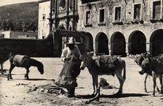 Zacatecas. trabajando en la Hacienda
