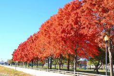 Fall Colors - Waterfront - Perth Amboy NJ