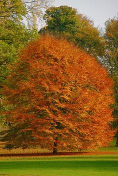 Autumn - National Botanical Garden of Belgium