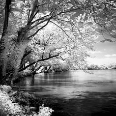 Spring on the River Square I Print