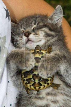 カメを抱っこして眠る猫