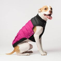 Canada Pooch Summit Stretch Vest | The warm and stylish puffer dog vest with a stretch belly panel for the ultimate adjustable fit perfect for big dogs