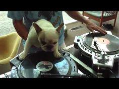 Wenisimo Perro DJ