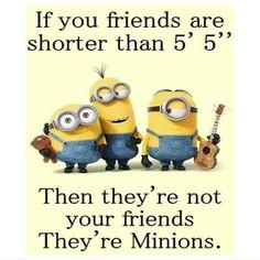 I'm sure minions are shorter than Minions Friends, Happy Minions, Cute Minions, Funny Minion Memes, My Minion, Minions Quotes, Minion Stuff, Minion Humor, Funny Comments