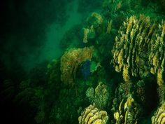 Morze Czerwone;)?  - to czemu jest tak zielono????