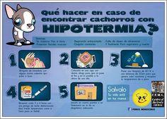 Cómo salvar a un cachorro en caso de hipotermia
