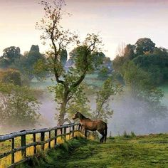 Ideas For Painting Nature Landscape Mornings Beautiful World, Beautiful Places, Beautiful Pictures, Beautiful Horses, Animals Beautiful, Country Life, Country Roads, Photo Animaliere, Good Morning World