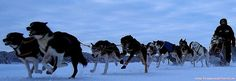 the art of mushing - Team Lapland sleddog racing