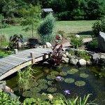 Jardim Japonês com Pequeno Lago