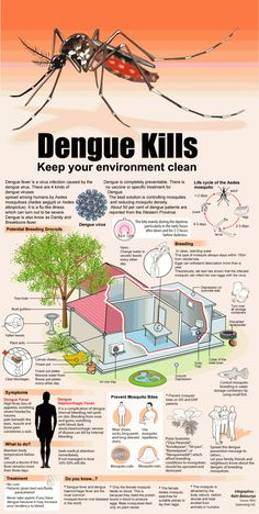 Dengue Fever Infographic Health and Fitness Infographics Prevent Mosquito Bites, Mosquito Control, Pest Control, Remedies For Tooth Ache, Dengue Fever, Turmeric Health Benefits, Fungal Infection, Life Cycles, Health Problems